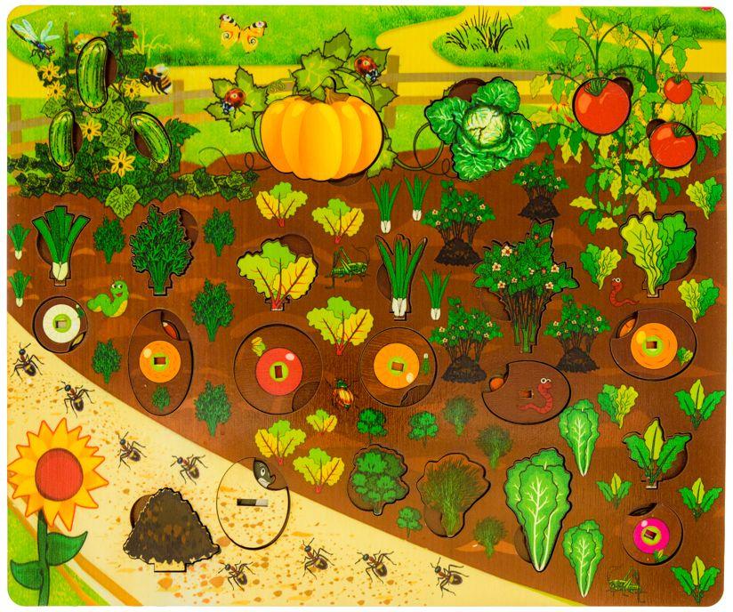 Овощи на огороде картинка для детей, картинка