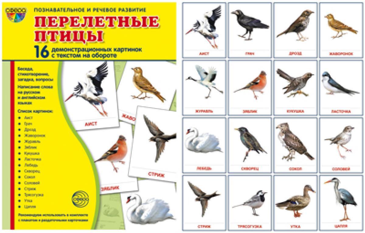младенца, название перелетных птиц фото вероятный